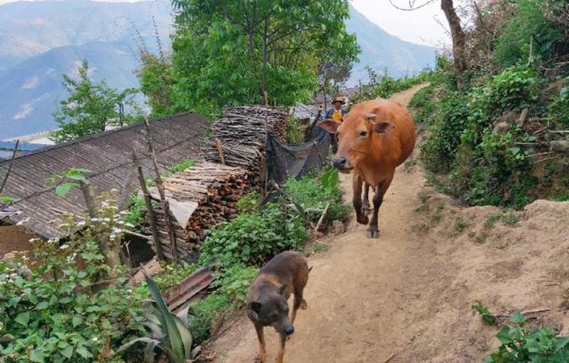 农业农村部等三部门印发紧急通知 加快养殖业复工复产