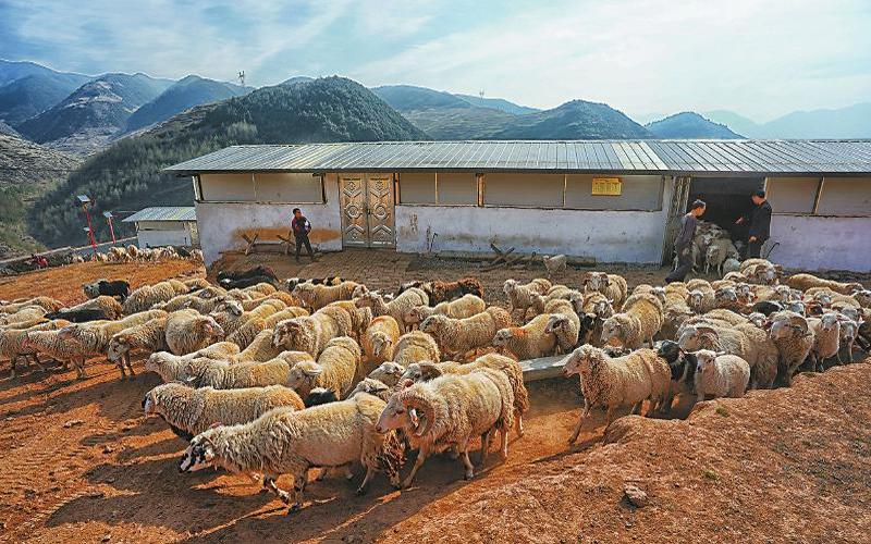 """农业产业持续""""造血""""贫困地区"""
